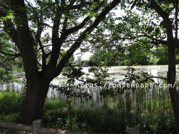 中津 大貞公園 DSC02838