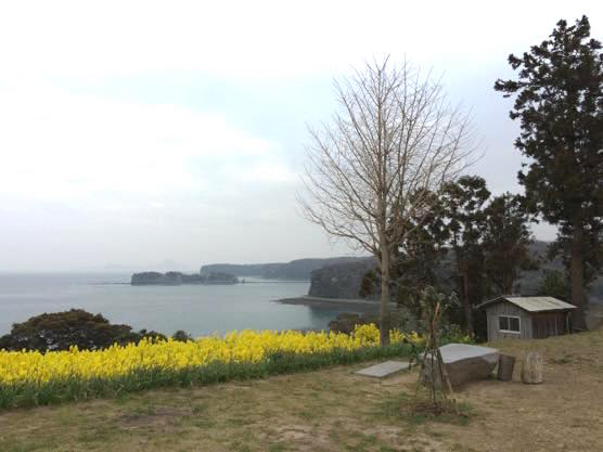大分 香々地 菜の花 2015IMG 3563