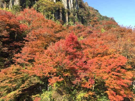耶馬溪の紅葉とほのぼの茶屋の幸せランチ