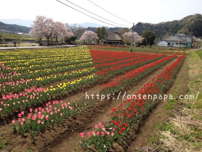 IMG 4159大分 原尻の滝 ブログ