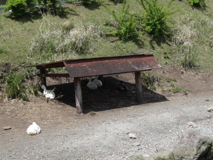 大分 ガンジー牧場 DSC01475