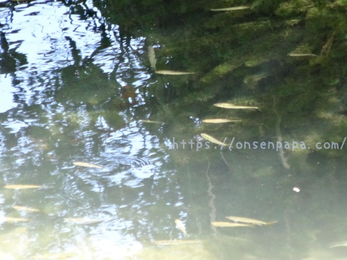 七瀬川自然公園