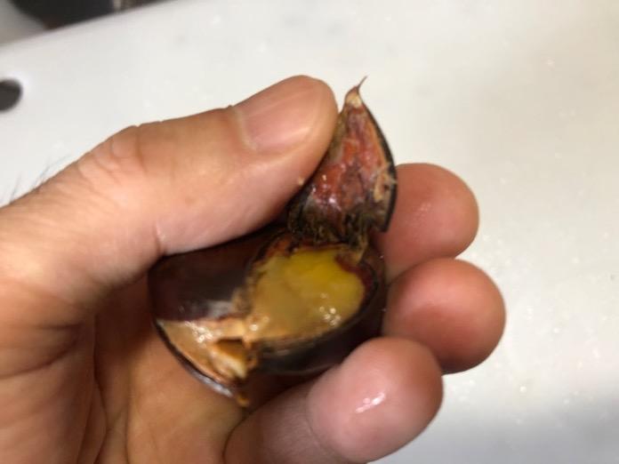 栗 くり 圧力鍋 レシピ  IMG 7018