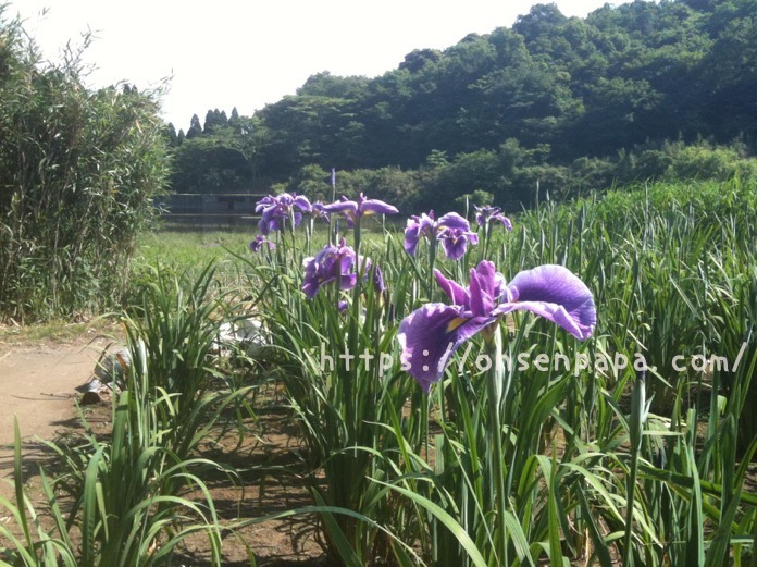 別府 神楽女湖  IMG 1177