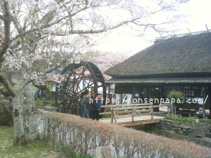 原尻の滝 チューリップ ブログIMG 0491